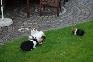 katzen und kaninchen