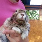 kieferabszess-kaninchen