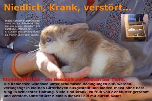 kleintiermarkt-kaninchen