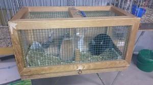 kleintiermarkt-kaninchen-qual