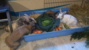 kohl kaninchenfutter