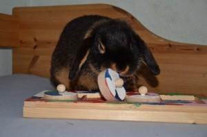 logispiele-kaninchen