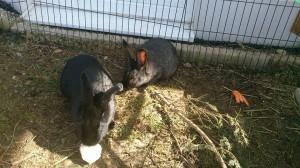 matsch kaninchengehege