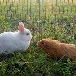 Kaninchen & andere Tiere