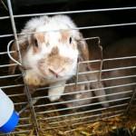 Zoohandel-Kaninchen?