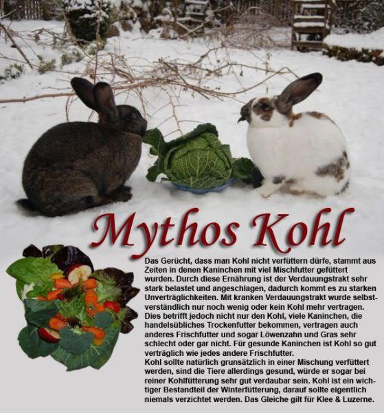 mythos-kohl-kaninchen