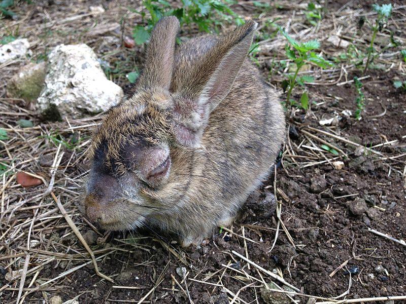 Long Island Baby Bunnies Wild