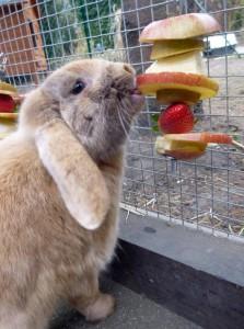 obst-kaninchen