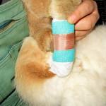 pfotenverband-kaninchen