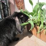 probebiss kaninchen