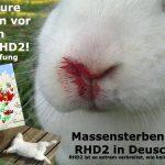 Richtig impfen gegen die mutierte Chinaseuche RHD2