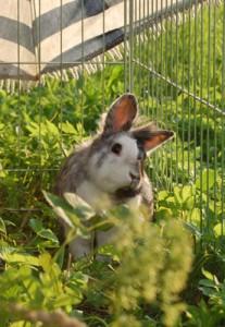 schiefkopf kaninchen