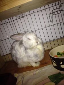 schilddrüse unterfunktion kaninchen
