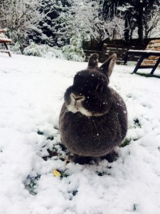 schnee kaninchen
