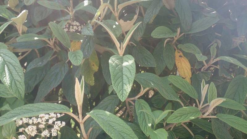welchenbboden für amberbaum