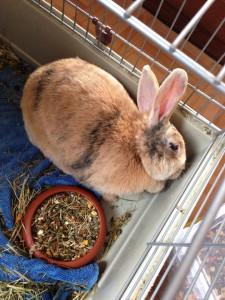 schräger-kopf-kaninchen