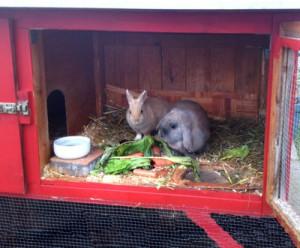 schutzhütte-kaninchen