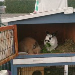 Kaninchenstall kaufen