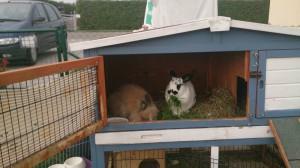 schutzhütte kaninchenstall