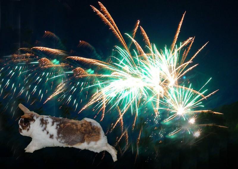Kaninchen flieht vor Feuerwerk an Silvester