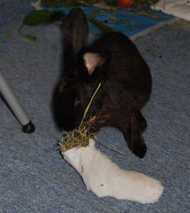 spielzeug-socke-kaninchen