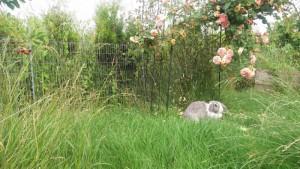 teichschutzzaun_kaninchen[1]