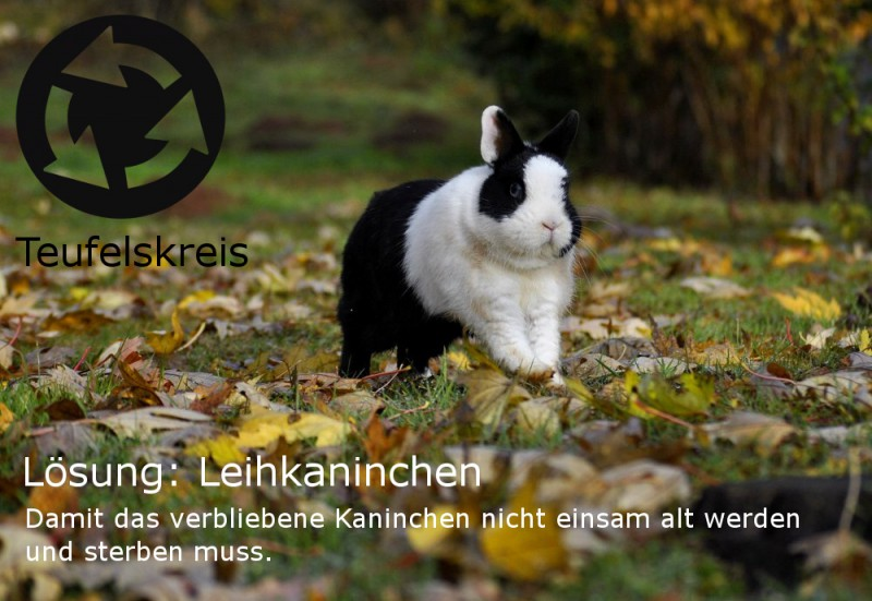 teufelskreis-soziale-kaninchen-leihkaninchen
