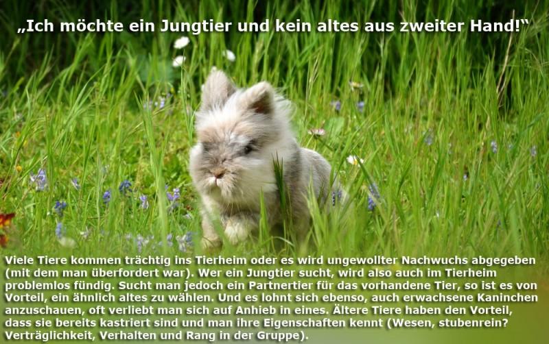 tierheim-jungtier-Kopie