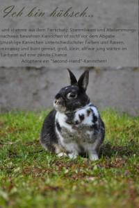 tierheim kaninchen