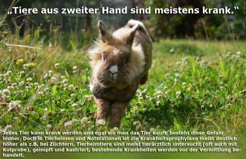 tierheim-kaninchen-krank-Kopie