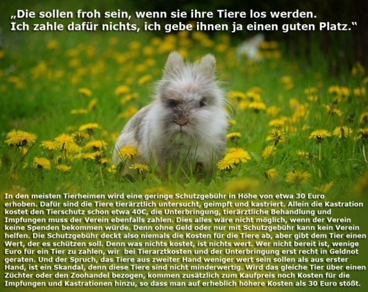 tierheim-kosten-Kopie_1