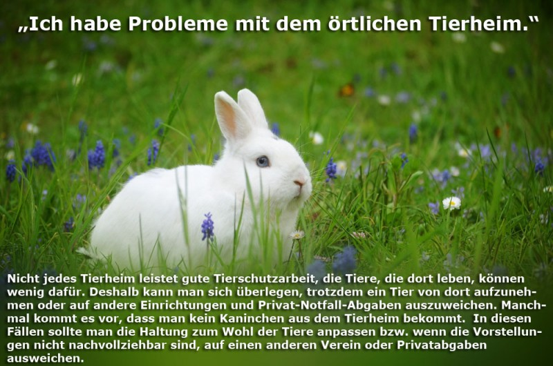 tierheim-probleme-Kopie