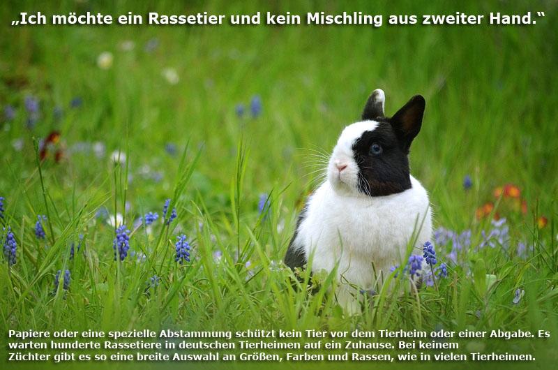 tierheim-rassekaninchen-Kopie