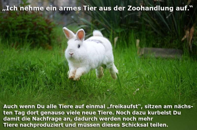 tierheim-zoohandel-Kopie
