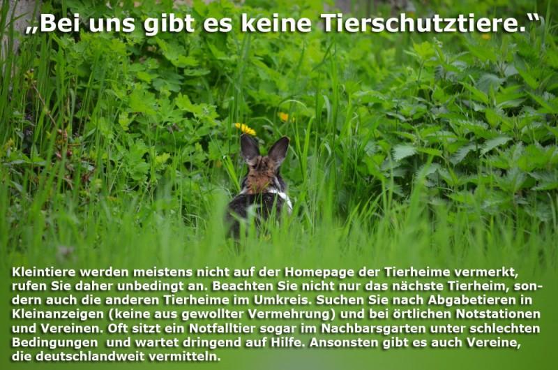 tierheimtier-woher-Kopie