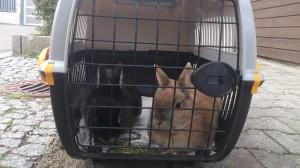 Kaninchen-Tierärzte