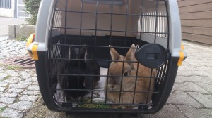 transport kaninchen
