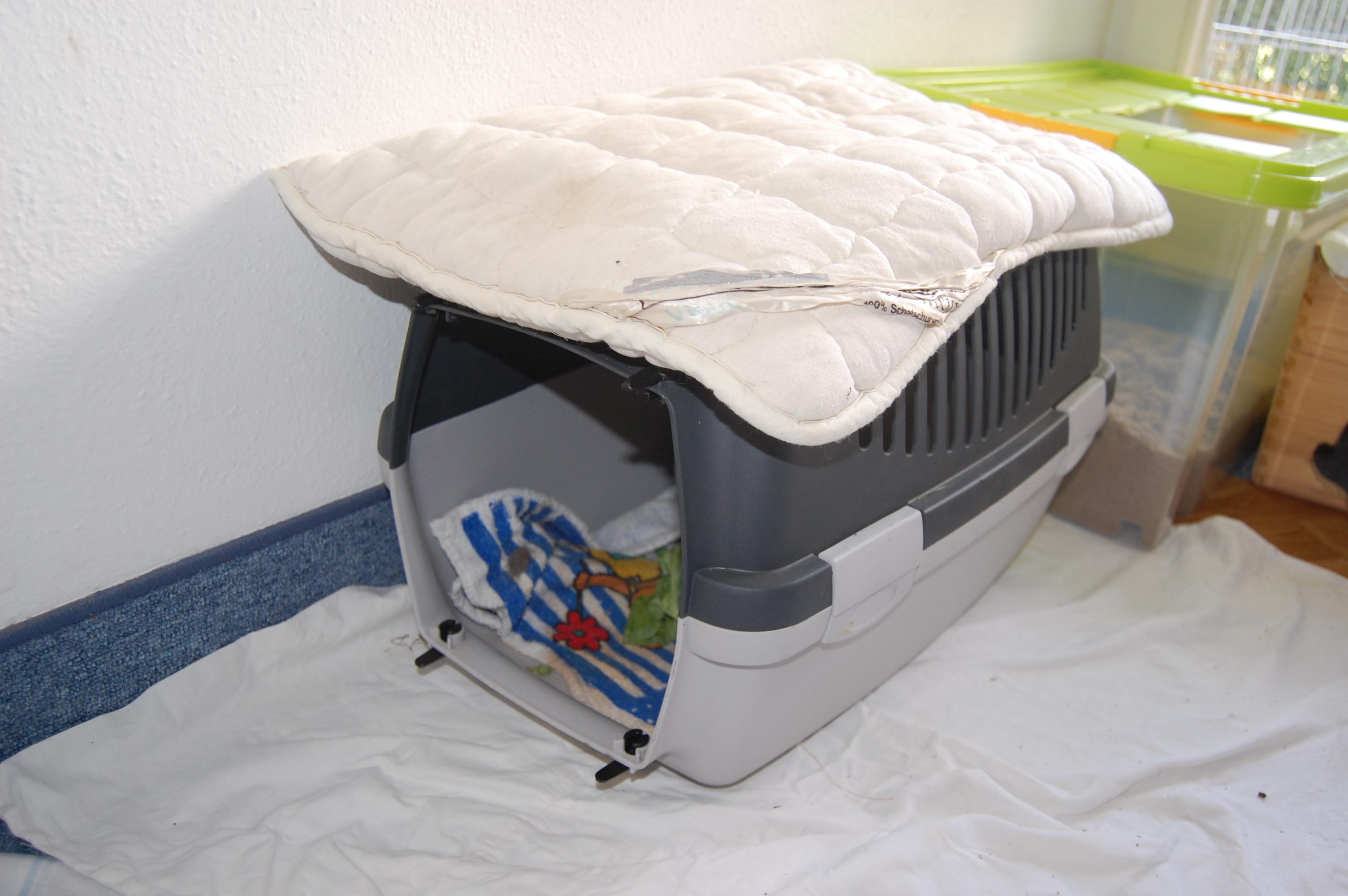 einzigartig hasen spielzeuge selber machen tierspielzeug. Black Bedroom Furniture Sets. Home Design Ideas