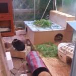 treibhaus kaninchen