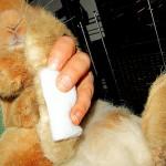 verband anlegen kaninchen
