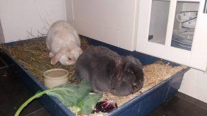verdauung-krank-kaninchen
