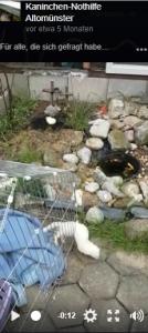 video marder frettchen gehege