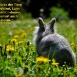 Kaninchen brauchen Hilfe - was tun?
