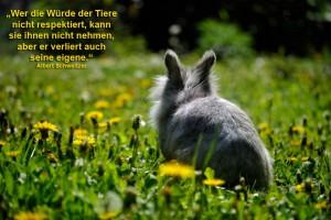 würde-kaninchen