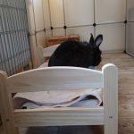 Songmics als Kaninchengehege