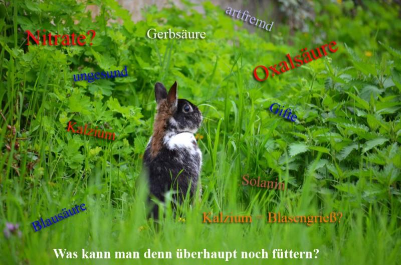 was darf man noch füttern kaninchen