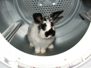 waschmaschine kaninchen
