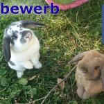 Wettebwerb für eure Kaninchen-Seiten auf Facebook