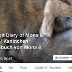 Wettbewerb Kaninchen-Facebookseiten