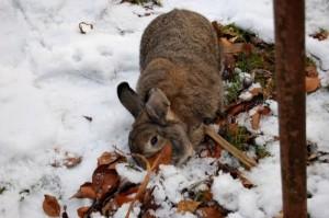 winter-futter-kaninchen